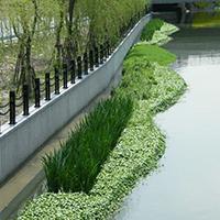 净化城市环境的5种出行方式